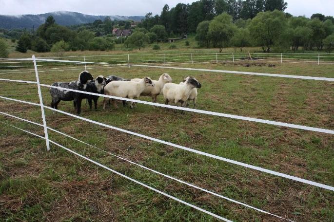 Elektrinis piemuo 5 juostų