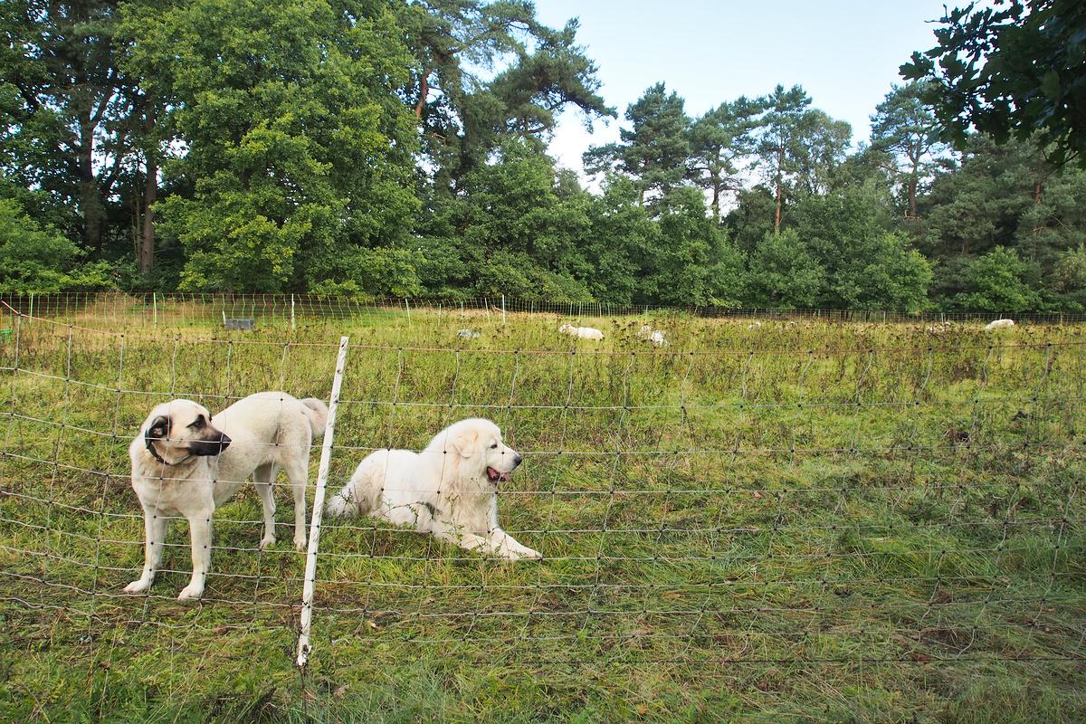 Bandą saugo elektrinis tinklas ir šunys