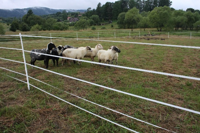 5 juostų elektrinis piemuo
