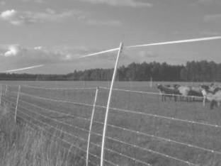 Vokiečių tyrimas apie efektyviausias apsaugos priemones nuo vilkų